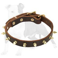 Elegant Leather Dog Collar with Gold Color Spikes for Fashionable Walking