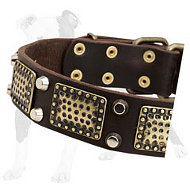 War-like Leather Dog Collar with old brass massive plates and 2 nickel pyramids