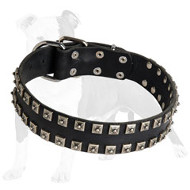 Studded Leather Dog Collar with Dotted Nickel Studs for Daily Walking