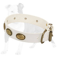 Fashionable White Leather Dog Collar with Brass Oval Plates for Daily Walking