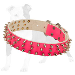 Designer leather dog collar decorated with silver-like spikes