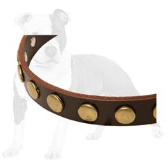 Canine Collar Made of Brown Leather