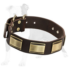 Designer leather dog collar decorated with vintage brass plates