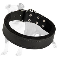 Dog-friendly training collar