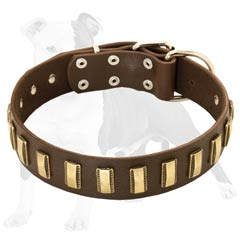 Super comfortable canine collar for daily wearing