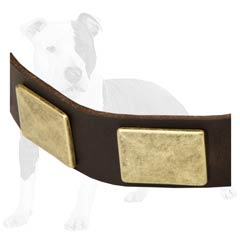 Astonishing beauty collar for your dog