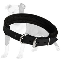 Terrific dog collar for good training of your dog