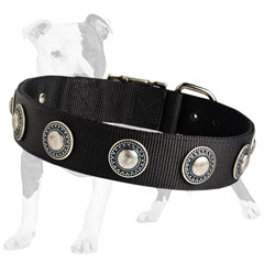 Nylon collar for better control of your dog