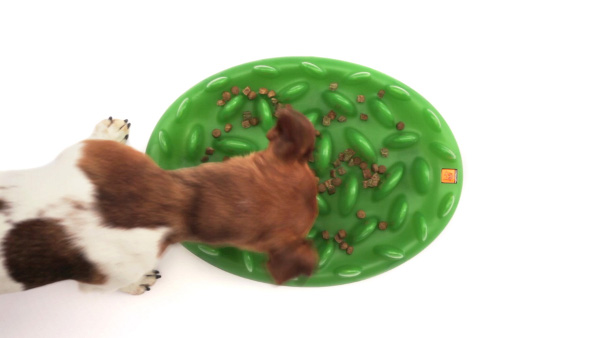 Interactive Canine Plastic Feeder