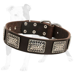 Designer leather dog collar decorated with vintage nickel plates