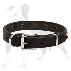 Leather Dog Collar for Puppy Walking