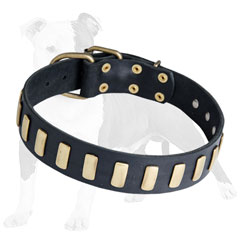 Walking Leather Dog Collar with Vertical Plates