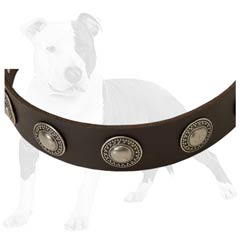 Leather Collar with Nickel Plated Conchos