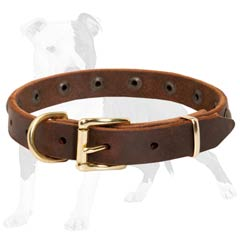 Leather Dog Collar for Small Dog Breeds