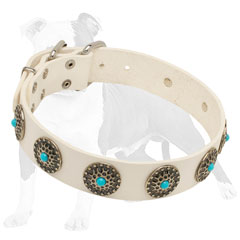 Studded Dog Collar Made of White Leather