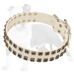 Trendy Leather Dog Collar with Hand Riveted Studs