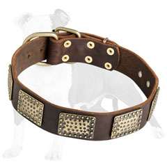 High Quality Canine Collar for Every Day Use