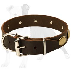 Stylish Dog Collar with Gorgeous Ovals