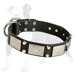 Leather Dog Collar with Massive Plates and Studs