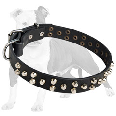 Fashion Canine Collar for Walking and Training
