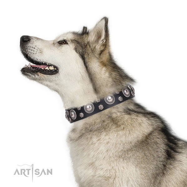 Walking studded dog collar of durable genuine leather
