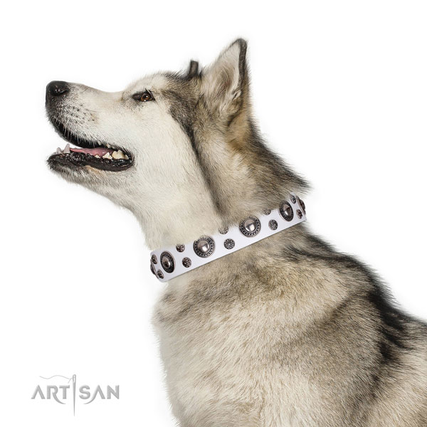 Comfortable wearing studded dog collar of strong natural leather