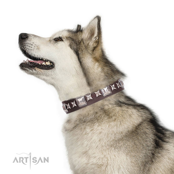 Daily use decorated dog collar of high quality material