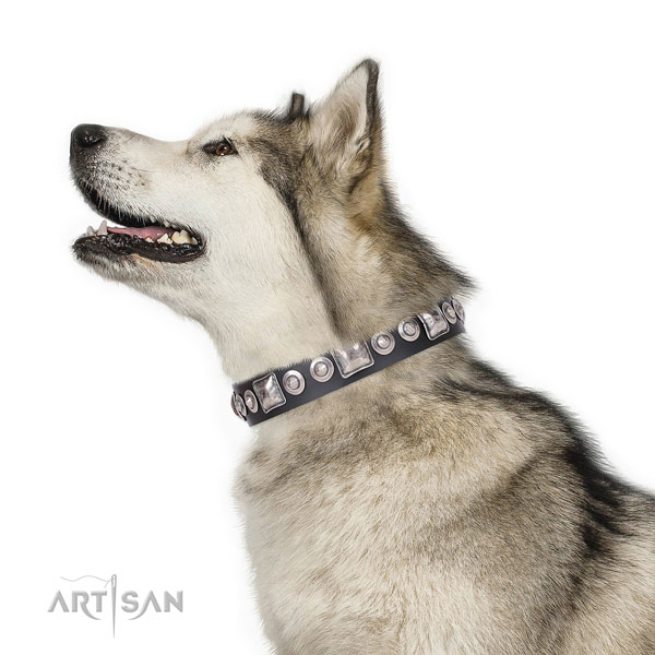 Trendy studded genuine leather dog collar for everyday walking