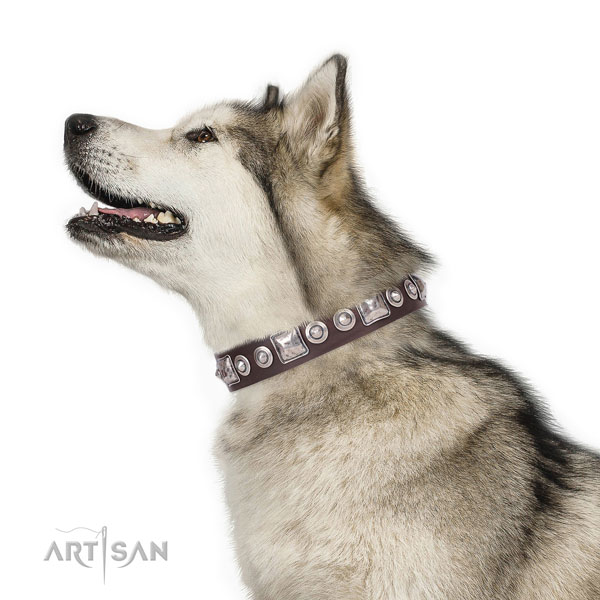 Stylish adorned genuine leather dog collar for daily use
