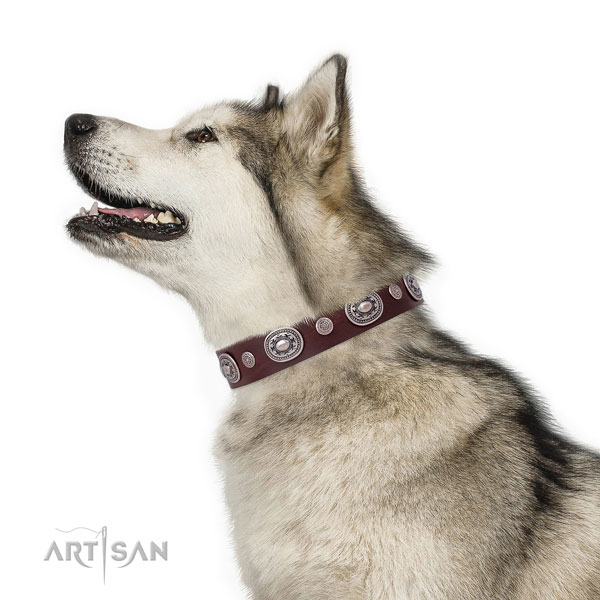 Corrosion proof buckle and D-ring on genuine leather dog collar for walking in style