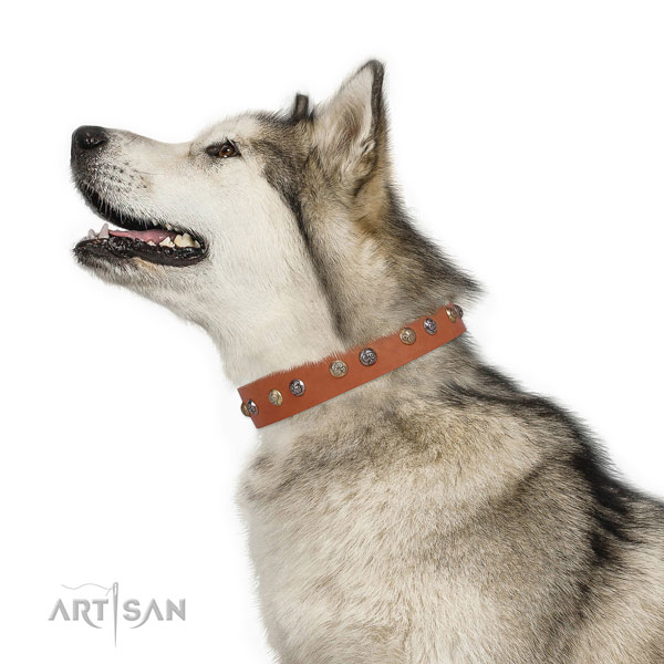 Natural leather dog collar with rust-proof buckle and D-ring for easy wearing