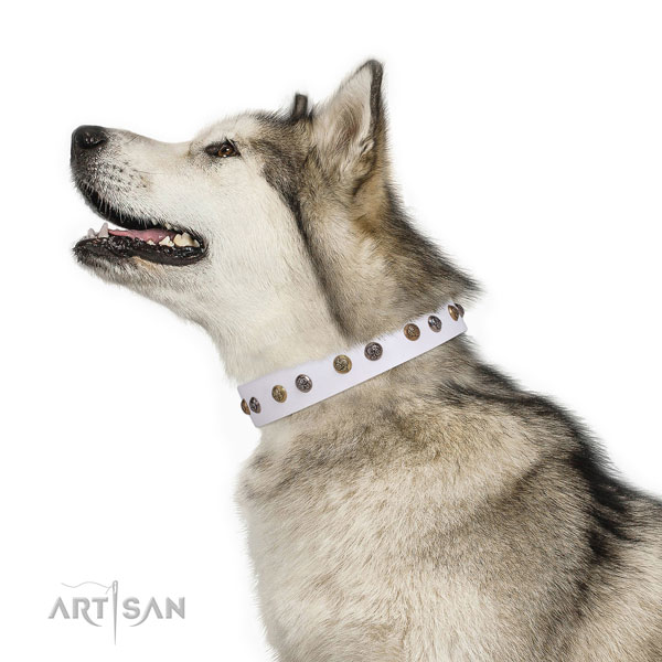 Handy use studded dog collar made of reliable natural leather