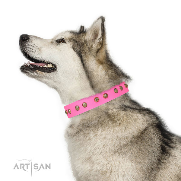 Exceptional embellishments on everyday walking full grain genuine leather dog collar
