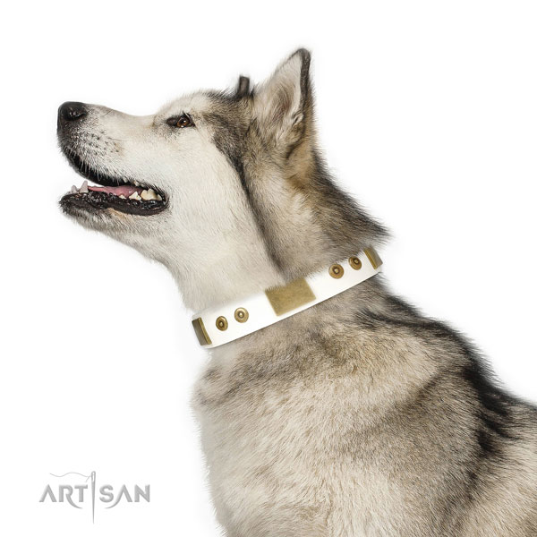 Quality stylish walking dog collar of leather