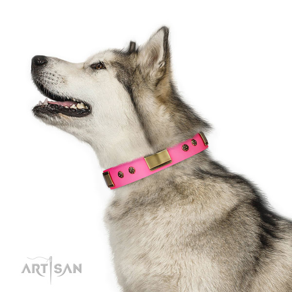 Comfy wearing dog collar of genuine leather with top notch studs