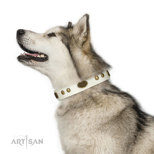 Corrosion proof buckle on natural leather dog collar for easy wearing