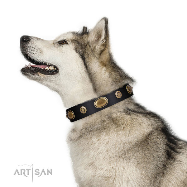 Comfy wearing dog collar of leather with extraordinary adornments