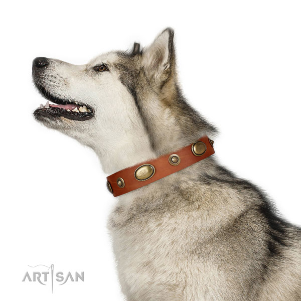 Everyday walking dog collar of genuine leather with incredible decorations
