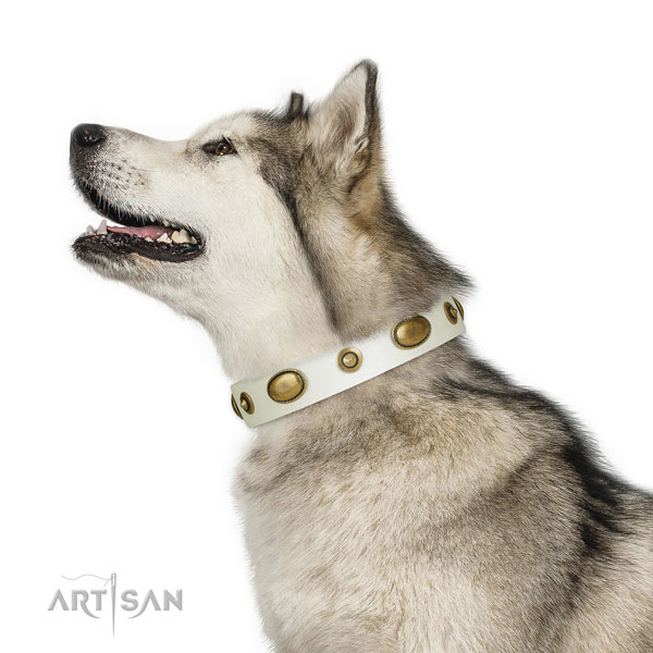 Daily use dog collar of leather with remarkable decorations