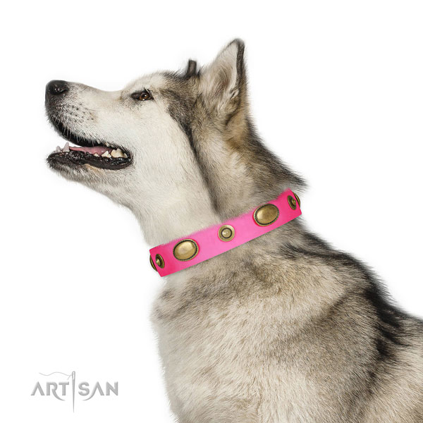 Walking dog collar of natural leather with remarkable embellishments