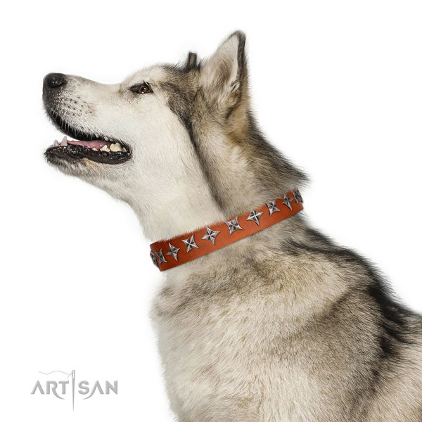High quality full grain natural leather dog collar with amazing adornments