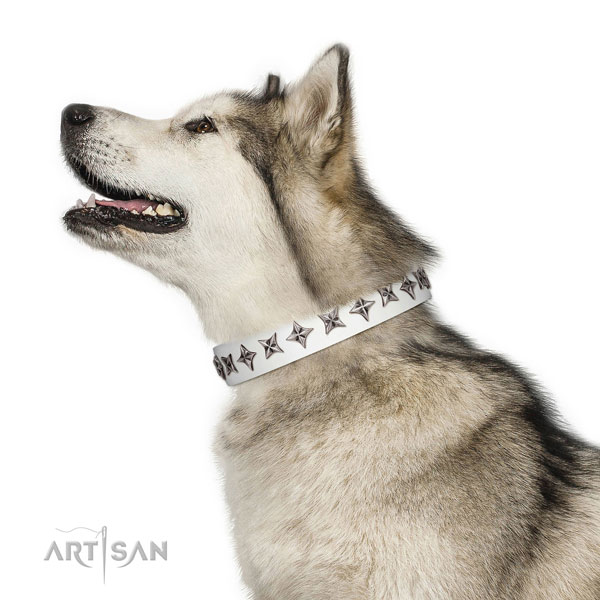 Finest quality full grain natural leather dog collar with stylish design decorations