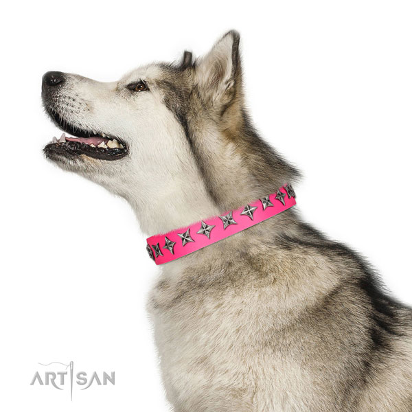 High quality full grain leather dog collar with impressive studs