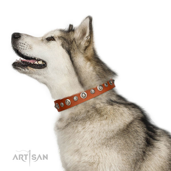 Fine quality genuine leather dog collar with unique studs
