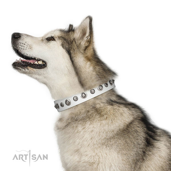 Genuine leather collar with corrosion resistant hardware for your stylish dog