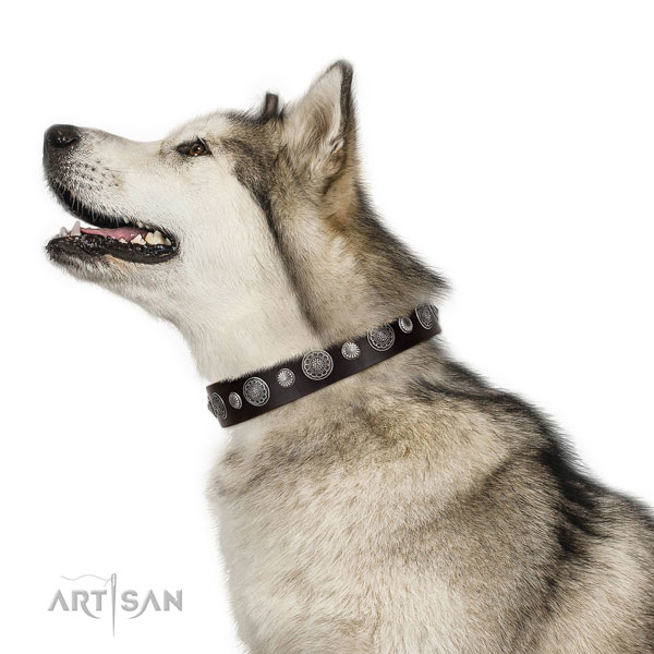 Adorned full grain genuine leather dog collar with corrosion proof buckle