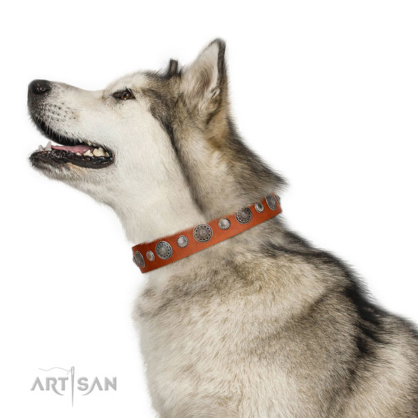 Stylish design leather dog collar with rust resistant traditional buckle
