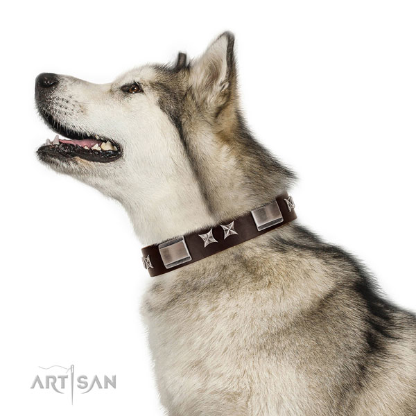 Designer collar of natural leather for your impressive doggie