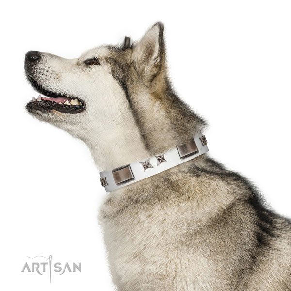 Decorated collar of leather for your impressive dog