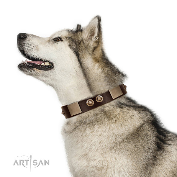 Reliable buckle on leather dog collar for basic training
